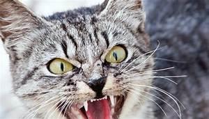 Amaryllis Giftig Für Katzen : die k rpersprache von katzen quiz ~ Frokenaadalensverden.com Haus und Dekorationen