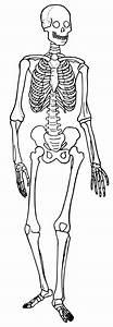 File Human Skeleton Diagram Trace Svg