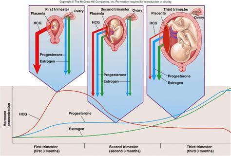 Anatomy Physiology 246 Thomas Flashcards