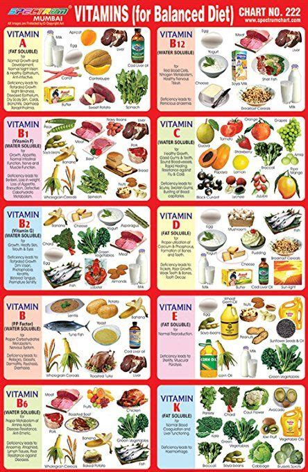 image result  balanced diet chart  school project