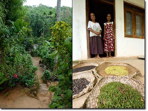 House Garden Designs In Sri Lanka