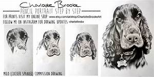 Cocker Spaniel Step By Step Drawing By Charlottexbx On