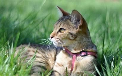 Cat Grass Cats Kot Wallpapers Desktop Animals