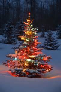 tree with lights outdoors in photograph by carson ganci