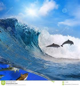 Dolphin Wave Jumping Ocean