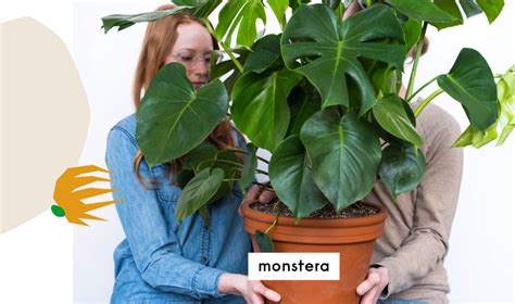 9 Of The Easiest Houseplants That Anyone Can Grow Bloomscape