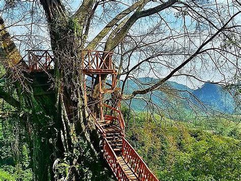 ciherang tree house  waterfall