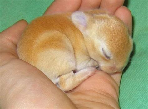 Cute And Funny Pictures Of Animals 33 Bunny 2