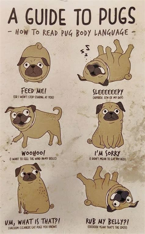 Guide To Memes - a guide to pugs