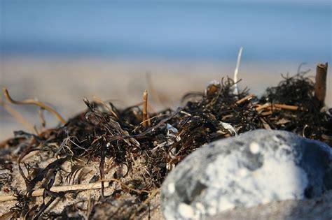 Seegras Daemmstoff Aus Dem Meer by 214 Kologische D 228 Mmstoffe Aus Dem Meer 1 Tiny Houses