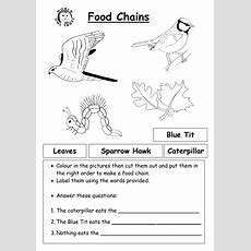12 Best Images Of Worksheets Food Chain Web Pyramid  Food Web Worksheet, Food Chains And Web's