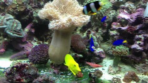 aquarium eau de mer 75l