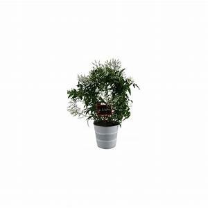 Cache Pot Plante : jasmin officinal cache pot zinc plantes et jardins ~ Teatrodelosmanantiales.com Idées de Décoration
