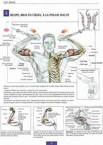 Biceps Exercises Bodybuilding Programs Pdf
