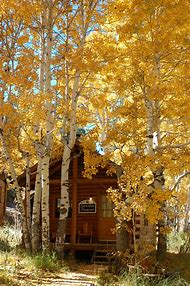Fall Colors Hope Valley California
