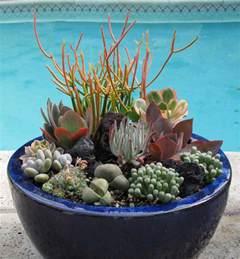 succulents garden clogs