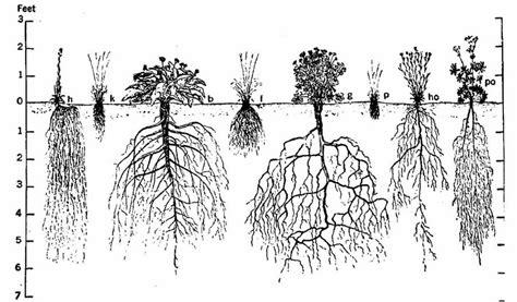 backyard gardener understanding plant roots march