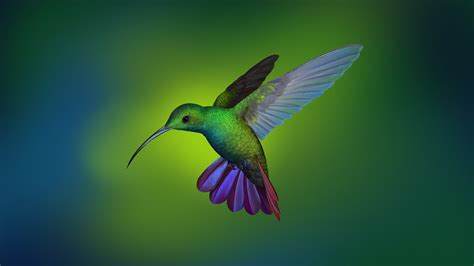 hummingbird hd laptop full hd p hd