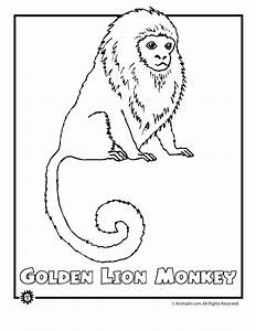 Rainforest Coloring Sheets Coloring Pages To Print 891 ...