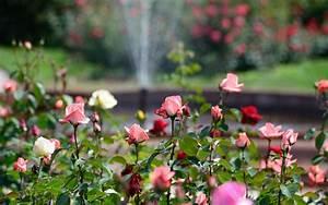 Japanische Gärten Selbst Gestalten : tolle japanische g rten selbst gestalten schema garten ~ Sanjose-hotels-ca.com Haus und Dekorationen
