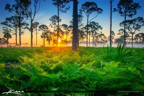 florida landscape pictures beautiful foggy morning sunrise florida landscape