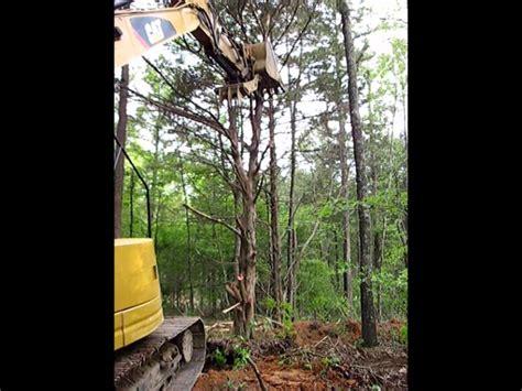 cedar tree root system top 28 cedar tree root system beach erosion life traces of the georgia coast protrails