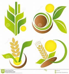 Wheat And Corn. Vector Logo Template Set. Stock Vector ...