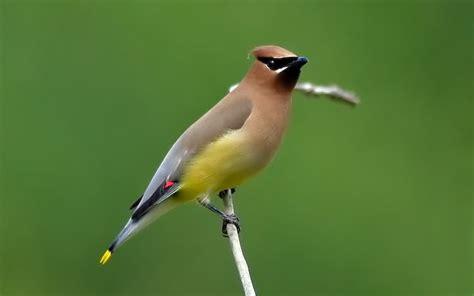 27 Best Birds Of Cincinnati, Ohio Images On Pinterest