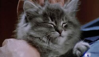 Cat Sleepy Giphy Safe Adorable Kitten Gifs