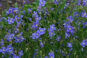 Schnell Wachsende Pflanzen : schnellwachsende pflanzen sichtschutz schnellwachsende ~ Articles-book.com Haus und Dekorationen
