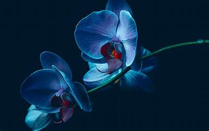 Orchid Wallpapers Flowers Background Earth Desktop Backgrounds