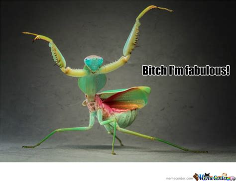 Mantis Meme - praying mantis is fabulous by recyclebin meme center