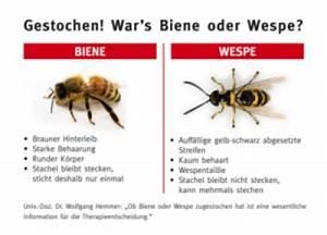 Wie Vertreibe Ich Wespen : insektengiftallergie biene oder wespe garten ~ Orissabook.com Haus und Dekorationen