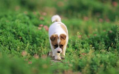 Dog Wallpapers Puppies Cave