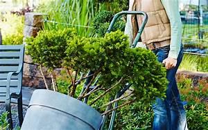 Dahlien Im Topf überwintern : winterschutz f r topfpflanzen saat und tat das gartenportal f r die region m nchen ~ Orissabook.com Haus und Dekorationen