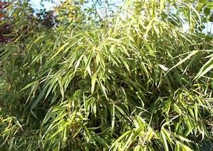 Bambus Im Garten Vernichten : bambus schneiden bambus schneiden wann wie oft ist das ~ Michelbontemps.com Haus und Dekorationen