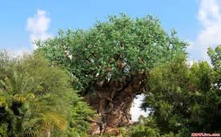 Animal Kingdom Wallpaper - disney tree of wallpaper wallpapersafari