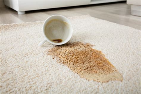 How To Remove Coffee Stains From Carpet Best Carpet Cleaner For Pet Stains Reviews Carpets Inc Beaverton Or Paris Cleaning Lancaster Ca Can I Use Oxiclean In Machine Owensboro Ky E Mills Cleaners Hampton Roads Va Premier Care Beatrice Ne