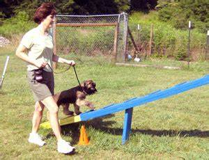 dog agility training atlanta dog trainer llc With dog training atlanta