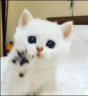 polah  kucing kecil imut iiiiihh sharing  caring