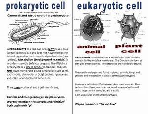 Cells Eukaryotic  Prokaryotic By Angela Holley