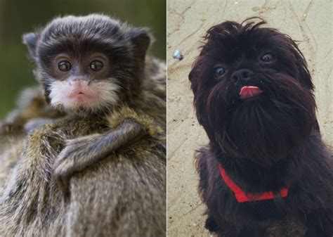 12 Cats And Dogs Who Look Like Other Animals — Photo Gallery