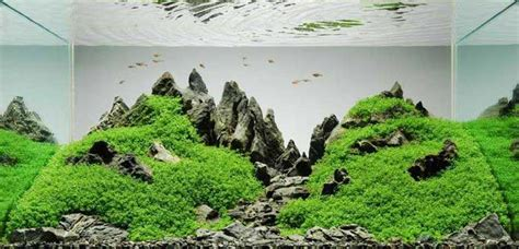 Aquascaping Aquarium by A Guide To Aquascaping The Planted Aquarium