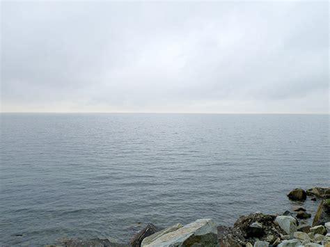 empty sea waterfowl weeta wanderin weeds