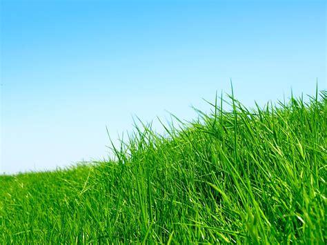 of grass grass wallpapers wallpapers hd