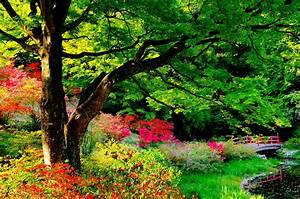 Japanese Garden Full HD Wallpaper and Background Image ...