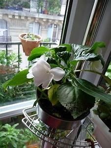 Plante D Intérieur : plante fleurie d int rieur page 2 paris c t jardin ~ Dode.kayakingforconservation.com Idées de Décoration