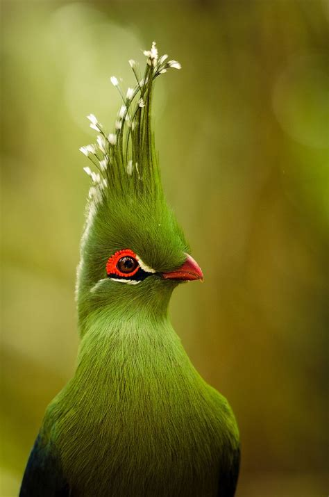 Best 25+ Exotic Birds Ideas On Pinterest  Pretty Birds