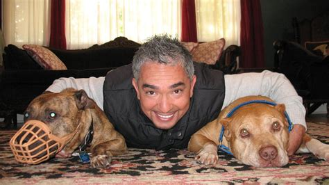 dog whisperer  national geographic channel asia