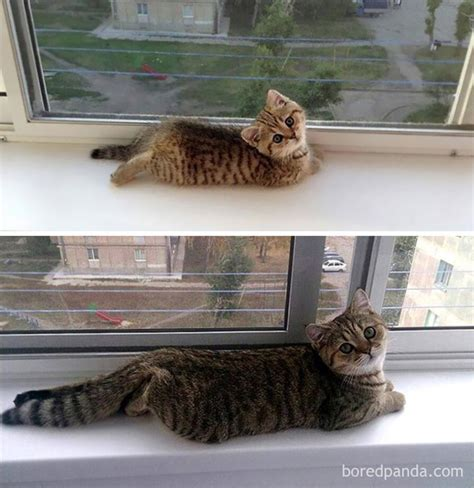 when are cats grown 10 before and after photos of cats growing up free animal videos